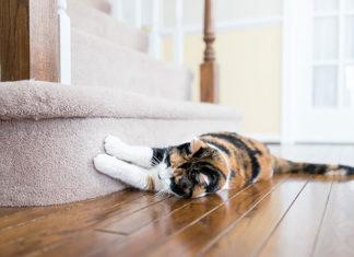 Jak oduczyć kota drapania mebli?